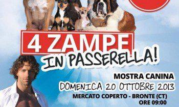 """BRONTE: DOMENICA 20 LA SECONDA EDIZIONE DI """"4 ZAMPE IN PASSERELLA"""""""